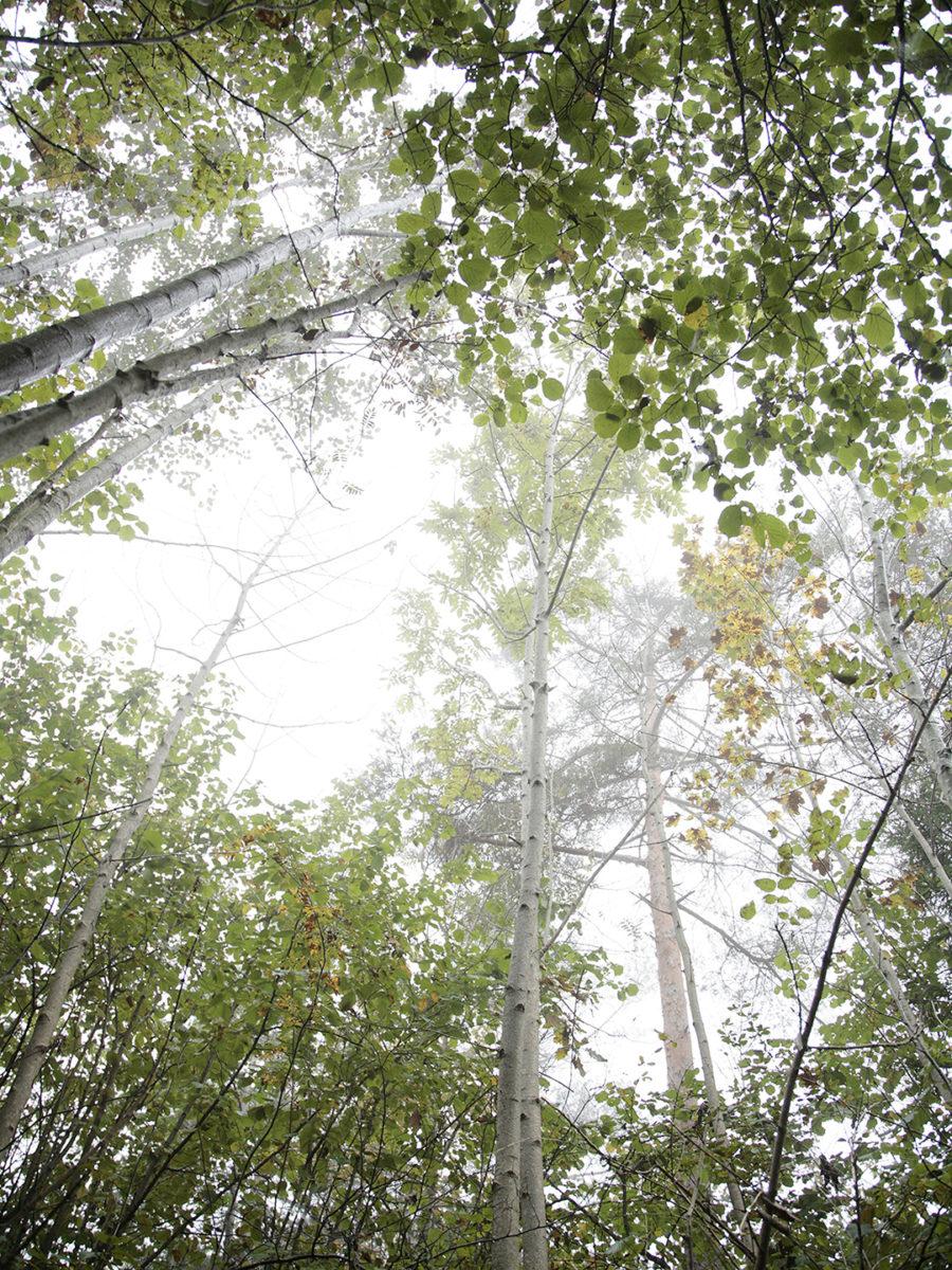 Lyset Fotografi som også er antatt på Sørlandsutstillingen